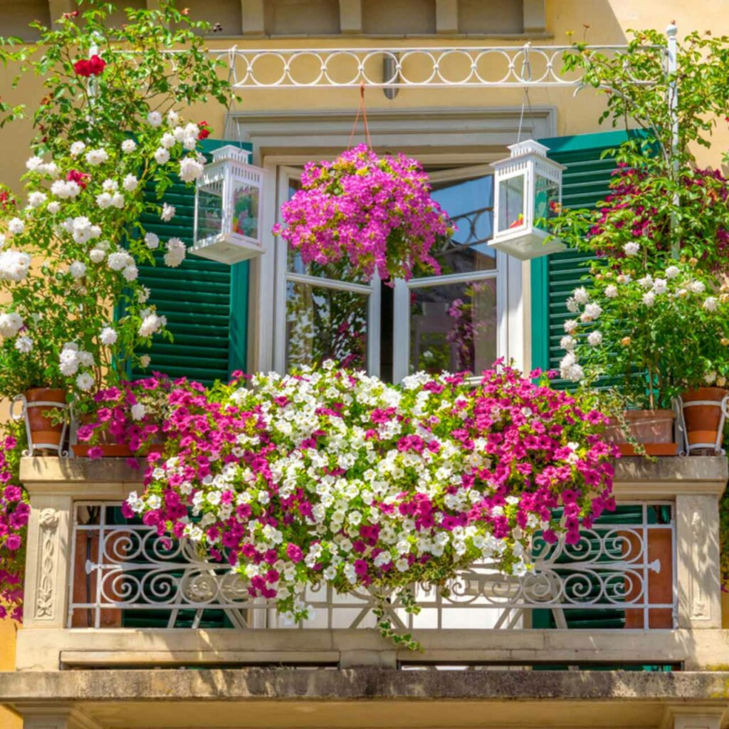 European style balcony design with flowers and plants which is an idea for balcony garden ideas india