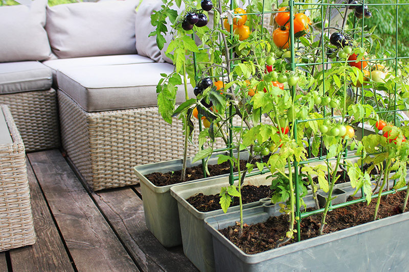 Balcony wall decoration ideas where you can cultivate your own little vegetable patch on your big balcony decoration