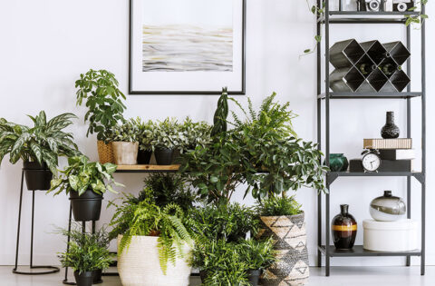 The best air purifying indoor plants for a refreshing home for you
