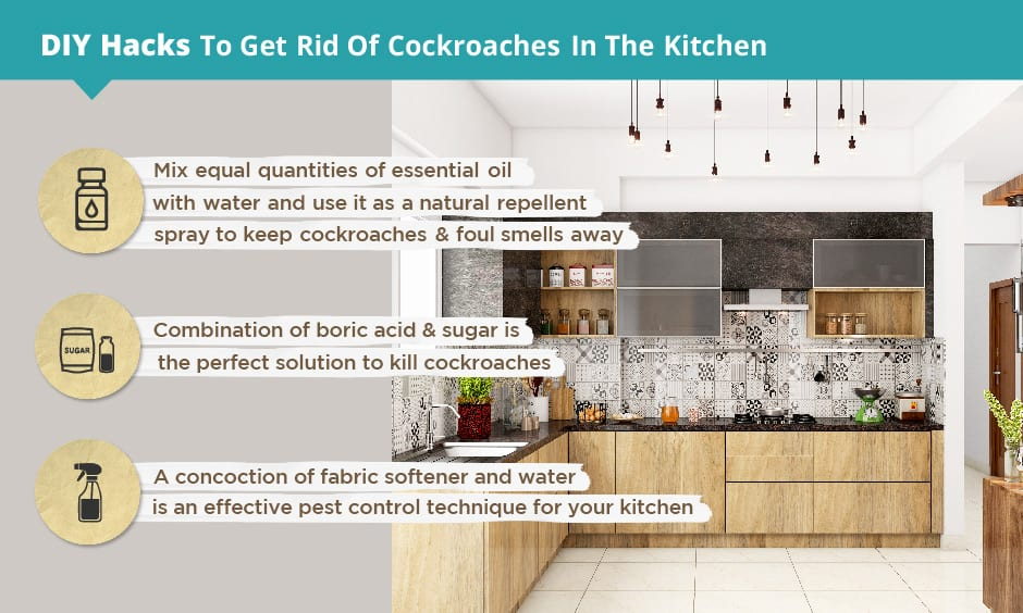 DIY hacks to get rid of cockroaches in your kitchen